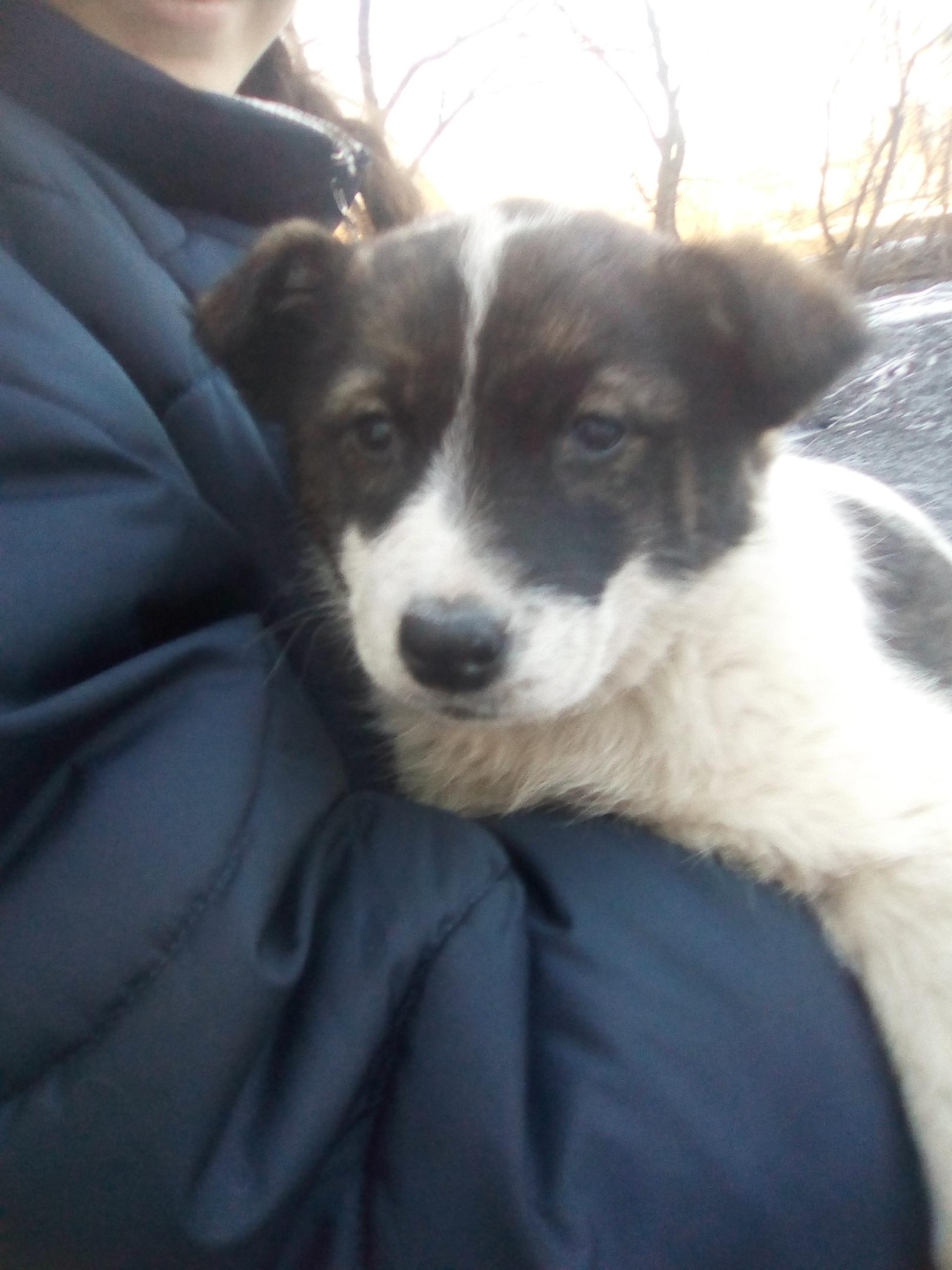 Потерялся щенок в районе Обувная фабрика.