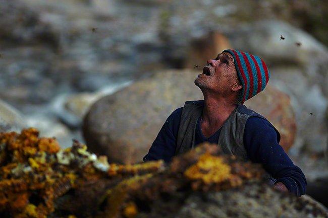 Сбор дикого мёда в Непале, изображение №6