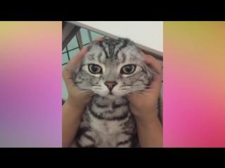 Самые милые котята. Сборник видео про котят. НУ ОЧЕНЬ МИЛО #2