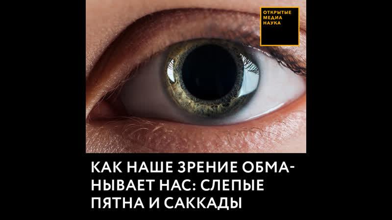 Как наше зрение обманывает нас слепые пятна и саккады