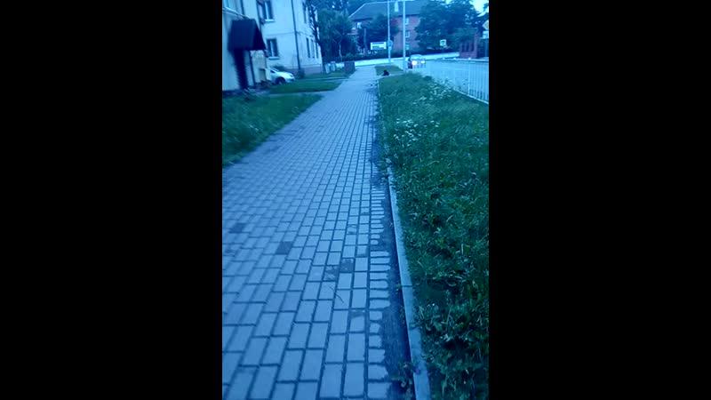 макс педр тупой