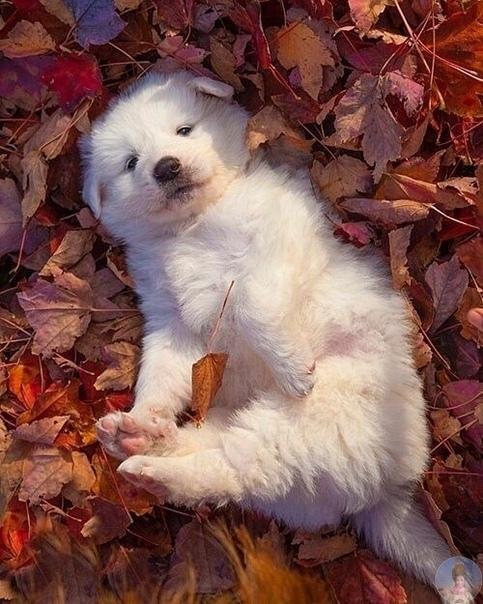 Осень - время добра