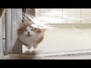 ENG 투명벽을 마주한 고양이들의 반응은 ㅋㅋㅋ Invisible Wall Challenge