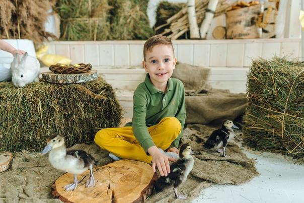 фотостудии с кроликами и утятами являются последними