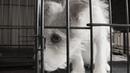 Большой отлов: в Волгограде уличные собаки мрут в неволе