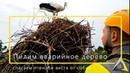 Спасаем аиста от собак Валка аварийного дерева частями Нужно спилить сухое дерево Арборист