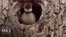 Breathing Space A Baby Bird Takes Flight SuperSoul Sunday Oprah Winfrey Network