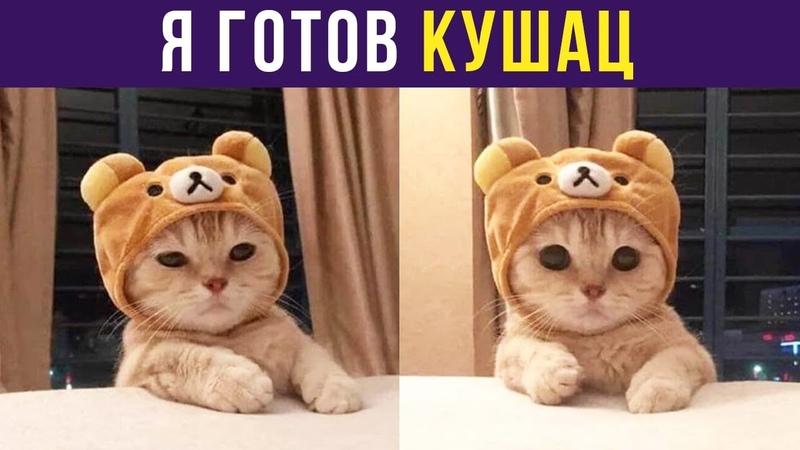 Приколы с котами. Я готов КУШАЦ | Мемозг 125