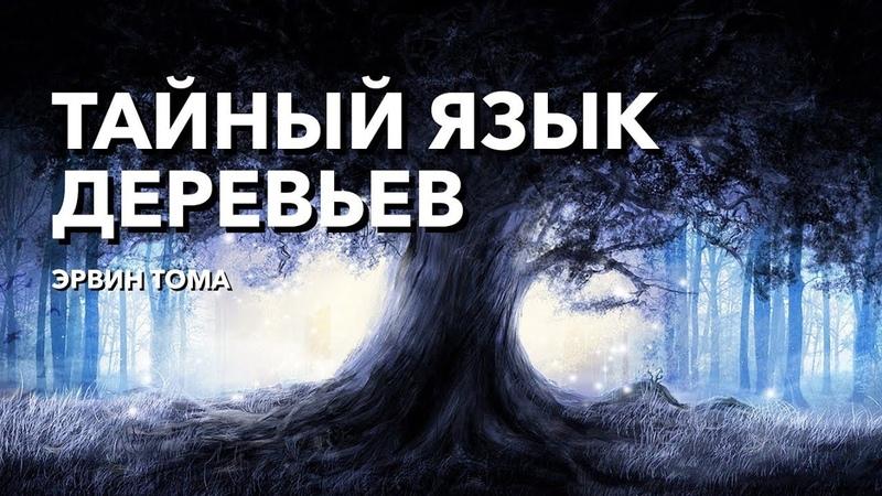 ЗДОРОВЫЕ ДЕРЕВЯННЫЕ ДОМА Фантастика или реальность