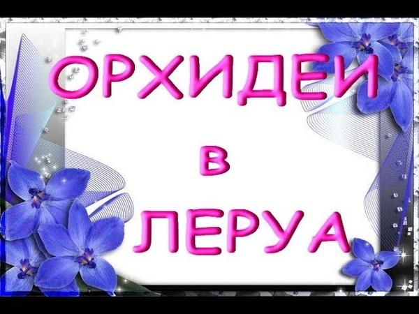 ЛЕРУА:свежий завоз ОРХИДЕЙ;приветы Елене,Егорушке,Ирине и Галине!