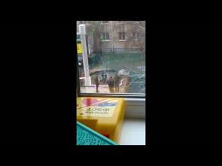 Появилось видео инцидента сдепутатом Госдумы Иониным, которое снимали полицейские.Смотреть до конца.mp4