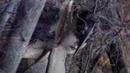 Пикник - Глаза очерчены углем