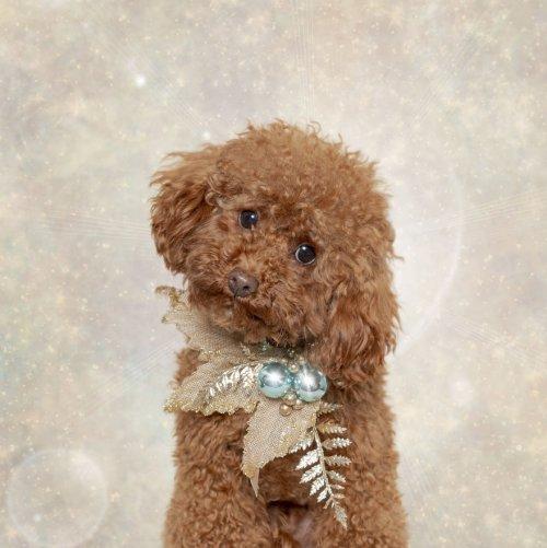 Очаровательные кошки и собаки в рождественской фотосессии