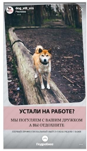 Кейс: продвижение стартапа по выгулу собак, изображение №9