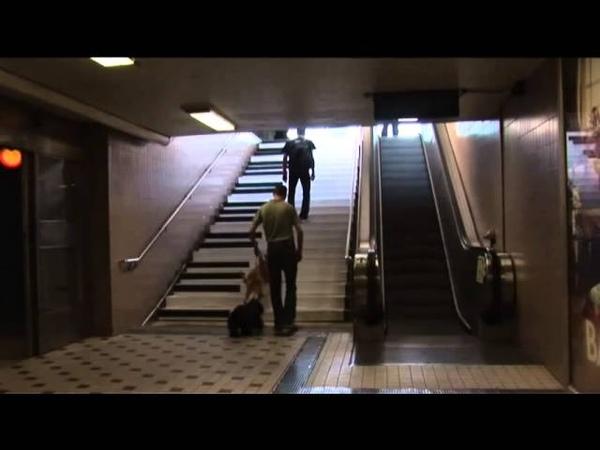 Escada vira piano Ação de marketing Wolkswagen na Suécia