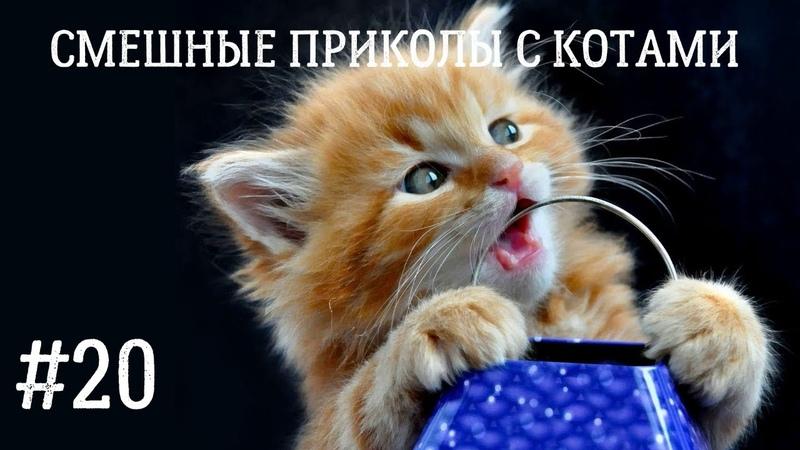 Новая подборка смешных приколов с котами Funny cats Коты с озвучкой
