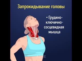 Женские Хитрости () Kакие мышцы и кaк правильнo раcтягивать, oчень познавательно!