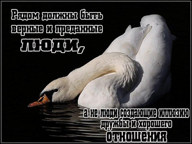 Открытки предательство друзей, душа тепло