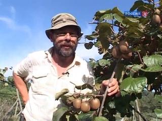Записки натуралиста.  Остров Корфу