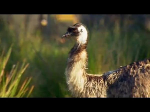 Яд Достижение эволюции Poison an evolutionary mystery 2015 Эпизод 3