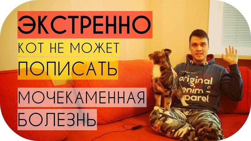 Кот не может пописать что делать срочно Мочекаменная болезнь у кота