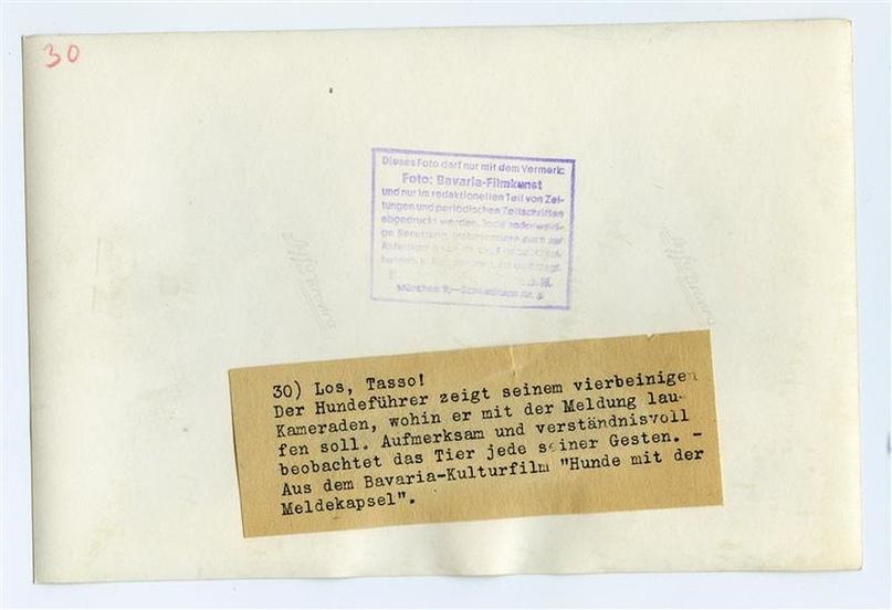 Рядовой вермахта Тассо, изображение №9