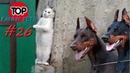 Лучшие приколы апрель 2019/ТОП СМЕШНЫХ ВИДЕО С КОТАМИ/Смешные животные/Смешные кошки/TOP FUNNY PETS