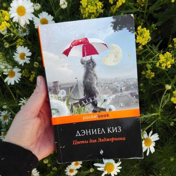 Книга цветы для элджернона картинки