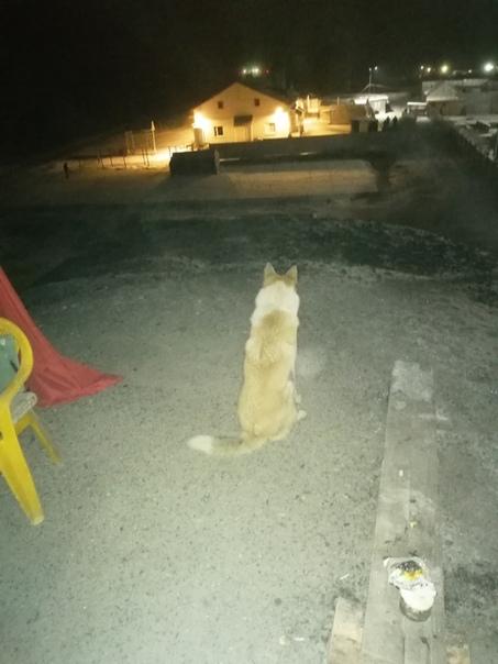 Пёс на посту
