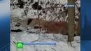 Стая собак загрызла дачницу в садоводстве под Петербургом