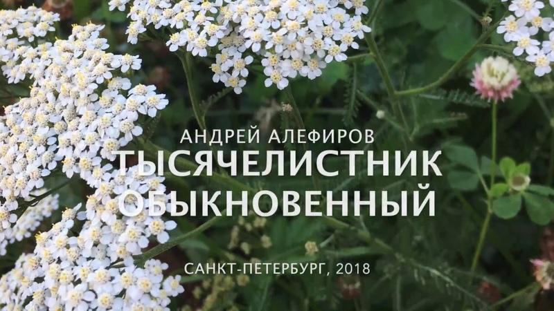 Тысячелистник обыкновенный, Алефиров А.Н.