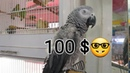 جديد اسعار الحيوانات والطيور والارانب وا 160