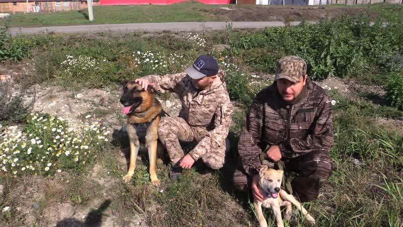 Добровольческий кинологический отряд «ДоброСпас-Новосибирск»