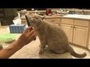 😸 КОШКА РУГАЕТСЯ, ЧТО ПЛОХО ПРИЧЕСАЛИ! ПОКАЗЫВАЕТ, КАК НАДО ПРАВИЛЬНО! CAT SCOLDS GROOMER!
