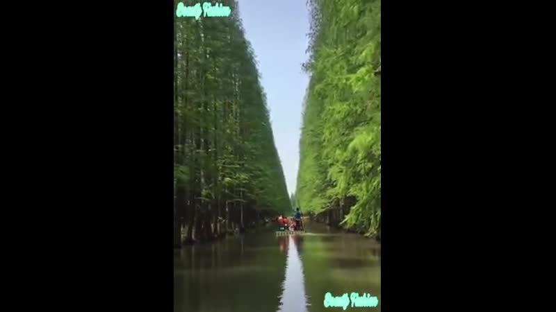 VIDEO 2019 08 09 11 18