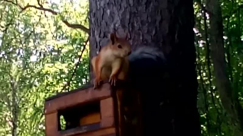 В Самаре, в парке им. Ю.Гагарина, в наших бельчатниках поселились белки!
