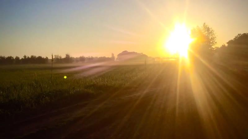 Пойменные пейзажи снятые во время поездок по Волго-Ахтубинской пойме в мае 2019г.