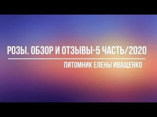 Часть 5/2020. Обзор и Отзывы о Розах Елены Иващенко