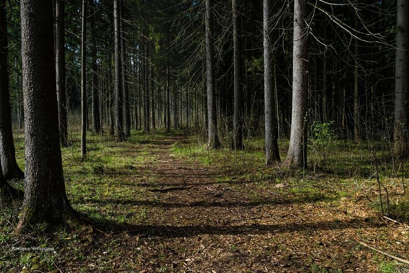 «Манящая тропинка в лесу»