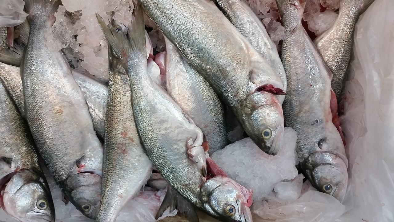Эксперт назвал самые опасные для питания человека виды рыб