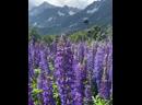 Цветущая красота Краснополянских гор