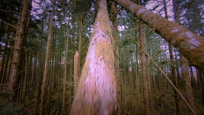 Fallen Trees - Cinewhoop - Shendrones Squirt 6S HD Автор mattystuntz.
