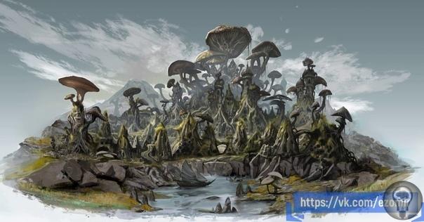 Первые грибы на земле