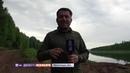 Хозяева Тайги как в Иркутской области уничтожают лес, провоцируя наводнения