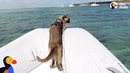 Cat Who Lives On A Boat Loves Visiting New Places - MISS RIGBY The Dodo