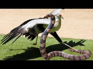 vũ khí đáng sợ lợi hại : Mưa axit , chất lỏng siết càng , Cú đốt tử thần Badger vs bee vs Snakes