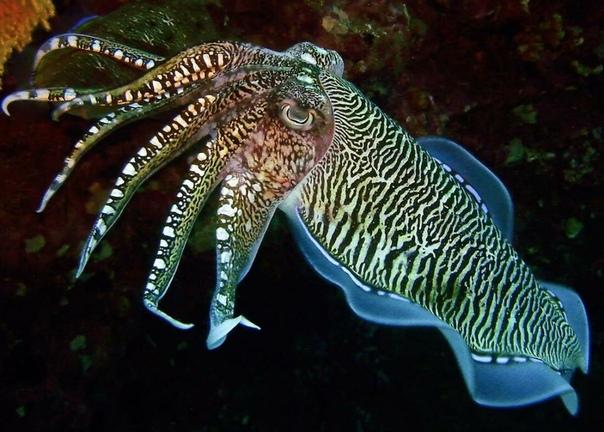cute cuttle fish - HD1200×900