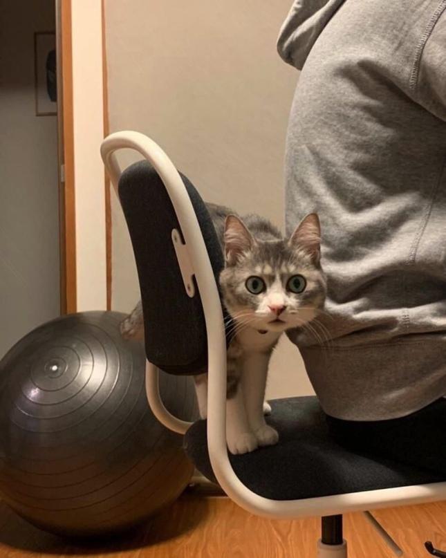 """""""Haшa кошка тepпeть нe может, когда ктo-тo садится нa ее cтул"""""""