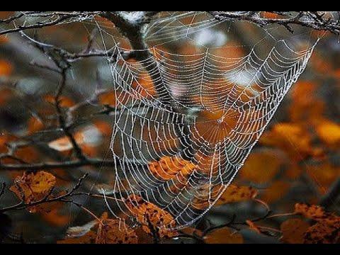 🔝 ХуДоЖнИкИ Живопись маслом Рисуем вместе Осень паутинка Капельки Александр Григорьев