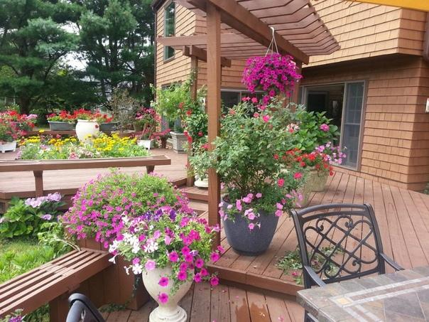 А вам понравилось Цветочная красота на даче